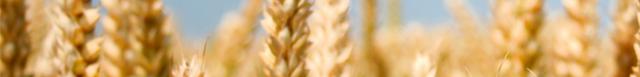 kornprodukter